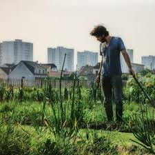 Agriculture🚜, domesticated plants... 🌽 nature modified by humans @ Jazzmin